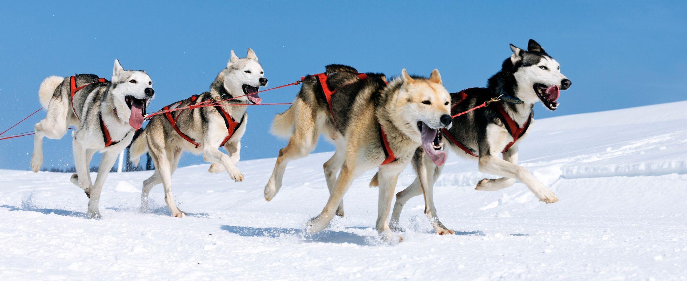 Choisissez le sport qui convient le mieux à votre animal de compagnie.