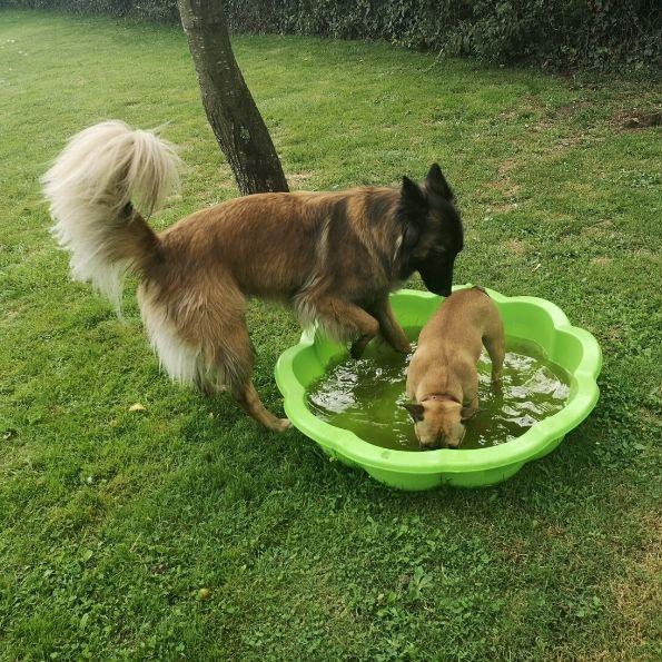A la pension canine les chiens peuvent se rafraîchir !