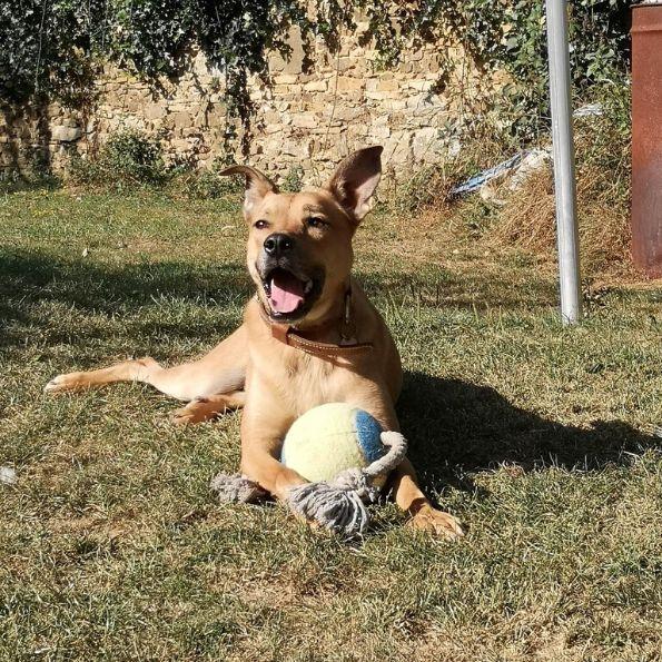 Des jouets pour le chiens joueurs sont disponibles à la pension.