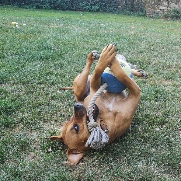 Un coin de paradis pour les chiens en l'absence de leur maître