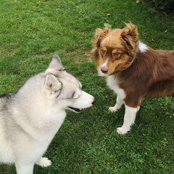 Rencontre tendrement chien, à la pension canine !