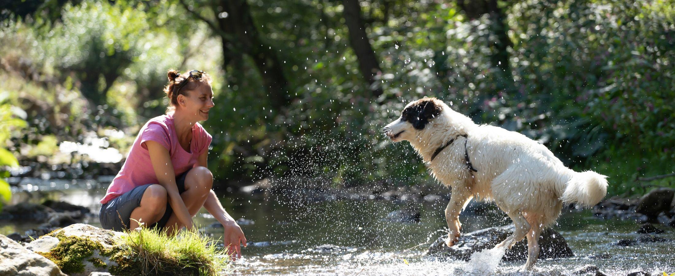 La canicule fait rage et votre chien aussi a besoin d'être au frais.