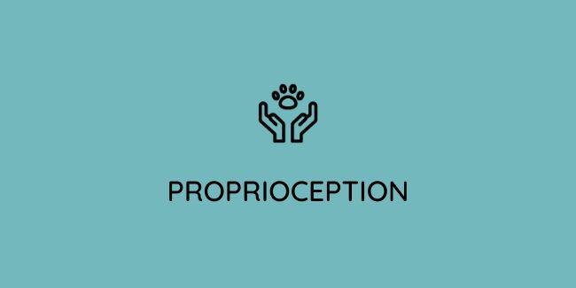 Débuter la proprioception pour chien. Des exercices de proprioception canine 2 fois par mois.