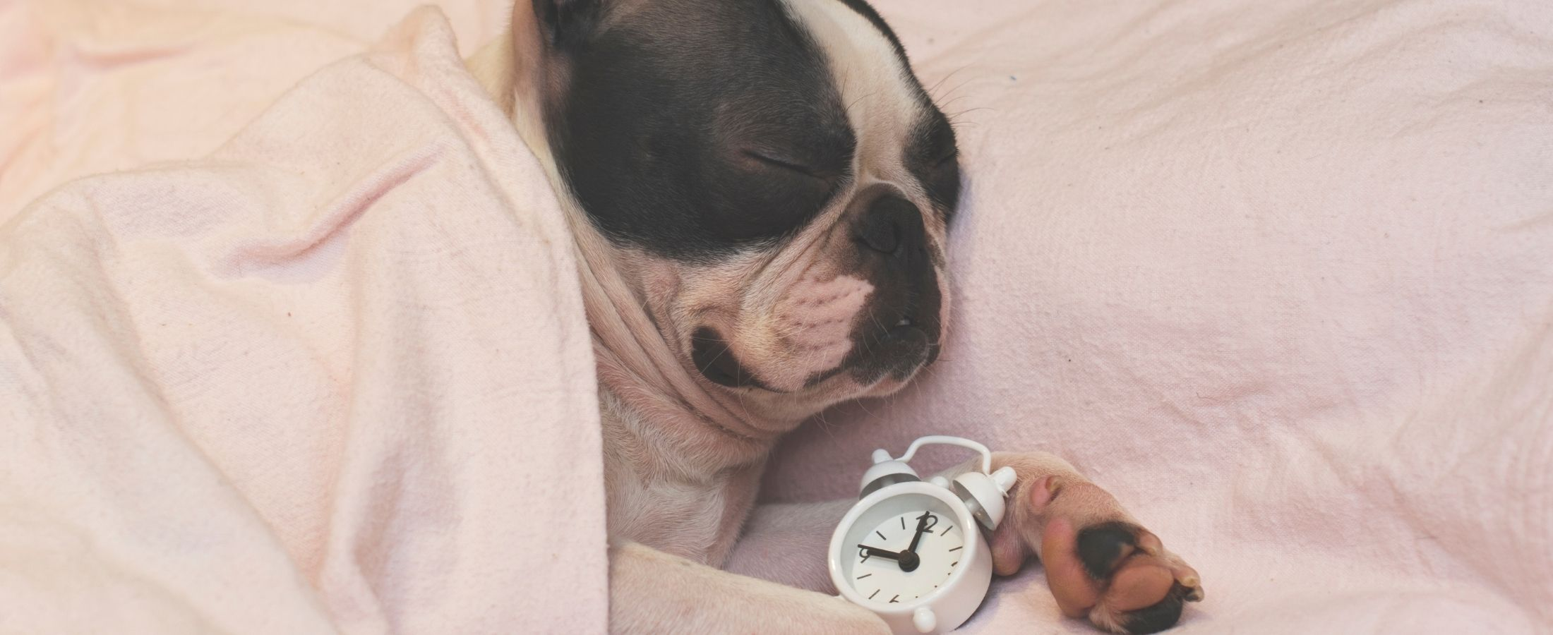 Le chien aussi a besoin d'avoir ses heures de sommeil au complet.