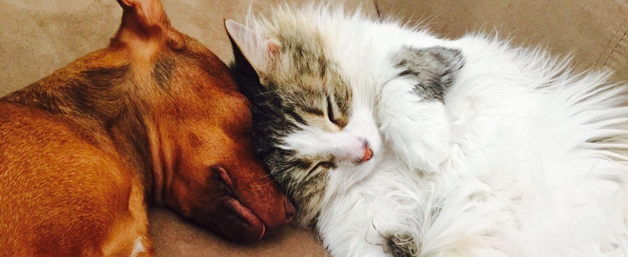 Ce chien et ce chat dorment ensemble. Mais sont-ils tous capable de s'aimer si fort ?